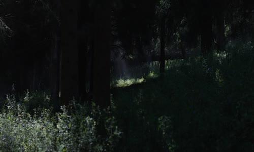 In the Earth EN (vložene titulky) 2021 Horror 1080p.mkv